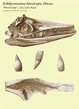 Ichthyosaurus breviceps