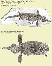 Latipinnate ichthyosaurs