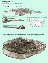 ichthyosaurs - details