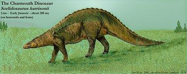 The Charmouth Dinosaur, Scelidosaurus