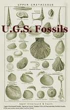 Upper Greensand fossils